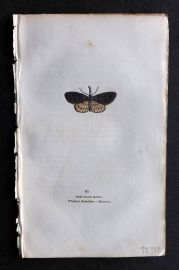 Captain Brown 1834 Antique Hand Col Moth Print. Snout Moth 90 Britain